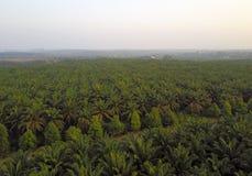 Вид с воздуха зеленой плантации ладони во время восхода солнца Стоковая Фотография
