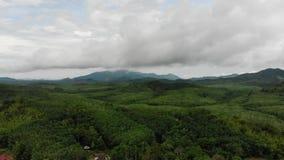 Вид с воздуха зеленых джунглей тропического леса в Азии акции видеоматериалы