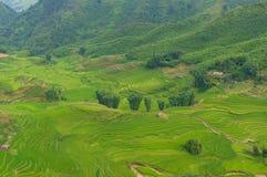 Вид с воздуха зеленых полей и террас риса Стоковые Изображения RF