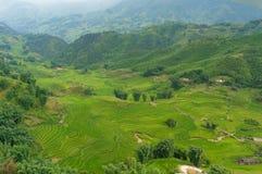 Вид с воздуха зеленых полей и террас риса Стоковая Фотография RF