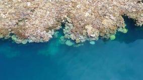 Вид с воздуха кораллового рифа падает в раджу Ampat видеоматериал
