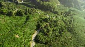 Вид с воздуха красивого зеленого ландшафта плантации чая в гористых м стоковое фото rf