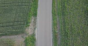 Вид с воздуха красного вождения автомобиля на дороге на молодом поле сток-видео