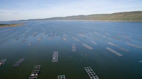 Вид с воздуха, курятник рыб, клетки рыб, Khonkean, Таиланд Стоковые Фотографии RF