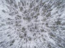Вид с воздуха ландшафта леса зимы Стоковая Фотография RF