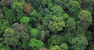Вид с воздуха леса в Малайзии сток-видео