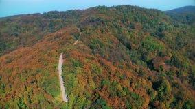 Вид с воздуха леса в осени видеоматериал