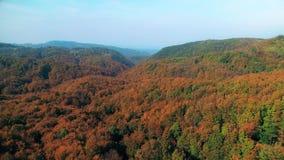 Вид с воздуха леса в осени акции видеоматериалы