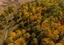 Вид с воздуха леса в осени стоковые фото