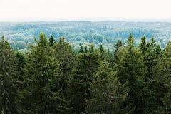 Вид с воздуха леса - елевые деревья от верхней части Стоковые Фото