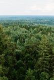 Вид с воздуха леса - елевые деревья от верхней части Стоковое Изображение RF