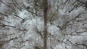 Вид с воздуха леса зимы с путем видеоматериал