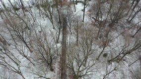 Вид с воздуха леса зимы с трассировкой корабля приходя из леса сток-видео