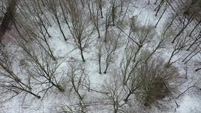 Вид с воздуха леса зимы с трассировкой корабля видеоматериал