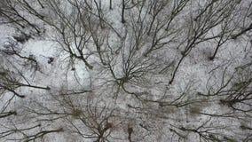 Вид с воздуха леса зимы с glade видеоматериал