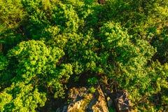 вид с воздуха леса и утесов Стоковая Фотография RF