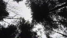Вид с воздуха над верхними частями дерева в сезоне зимы в Баварии сток-видео