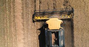 Вид с воздуха над работая жаткой комбайна в поле на заходе солнца Сбор тракторов и машин фермы видеоматериал