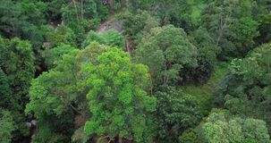 Вид с воздуха на лесе в Малайзии акции видеоматериалы