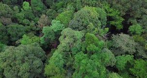 Вид с воздуха на лесе в Малайзии сток-видео
