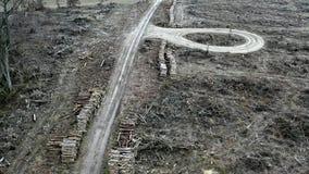 Вид с воздуха обезлесения, разрушенного леса после урагана сток-видео