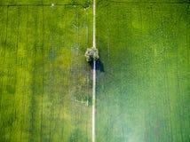 Вид с воздуха одиночного дерева в зеленом поле риса Стоковые Фото