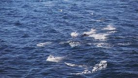 Вид с воздуха от шлюпки скача дельфинов в открытом море акции видеоматериалы