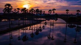 Вид с воздуха пальмы сахара с небом захода солнца Стоковые Изображения