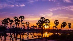Вид с воздуха пальмы сахара с небом захода солнца Стоковые Фотографии RF