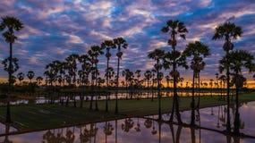 Вид с воздуха пальмы сахара с небом захода солнца Стоковое Фото