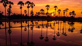 Вид с воздуха пальмы сахара с небом захода солнца Стоковые Фото