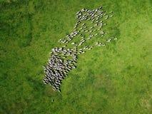 Вид с воздуха пасти овец собирается на поле весны стоковое изображение rf