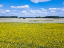 Вид с воздуха пестротканого поля желтых цветков, созрел к стоковые изображения