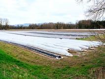 Вид с воздуха плантации спаржи весной стоковые изображения