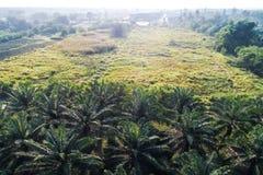 Вид с воздуха поля плантации дерева масличной пальмы Стоковые Фотографии RF