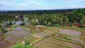 Вид с воздуха поля риса Террасная ферма в горе, vegeterian еда риса и поля сток-видео