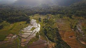 Вид с воздуха поля риса philippines стоковые фотографии rf