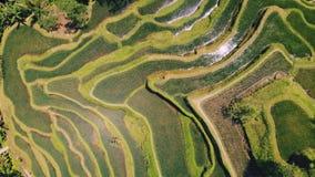 Вид с воздуха поля террасы риса принятого в Tegallalang, Бали Индонезию акции видеоматериалы