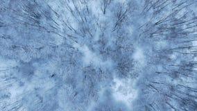 Вид с воздуха предпосылки зимы с покрытым снег лесом сверху сток-видео