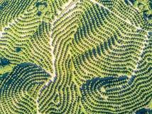 Вид с воздуха рощ оранжевого дерева на холмах Стоковые Фото