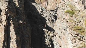 Вид с воздуха составленных утесов с крошить твердые частицы Клетчатые утесы Камень остается деревьев кремния Россия северная сток-видео