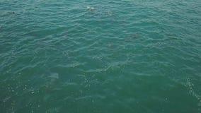 Вид с воздуха стручка дельфинов акции видеоматериалы