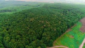 Вид с воздуха трутня смешанного леса между деревьями в солнечном весеннем сезоне и тропой около ее 4K видеоматериал