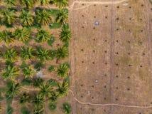 Вид с воздуха фермы кокоса с отрезком вниз с кокосовых пальм должных для того чтобы намочить немногочисленность взгляд сверху фер стоковое изображение rf