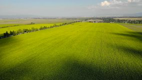 Вид с воздуха - цветя солнцецветы поле l солнцецветы видеоматериал