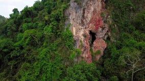 Вид с воздуха Beaeutiful леса в Малайзии сток-видео