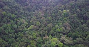 Вид с воздуха Beaeutiful леса в Малайзии акции видеоматериалы