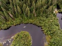 Вид с птичьего полета реки шлюпки каное одичалого каяка взгляда Канады леса aearial сплавляться canoeing veins сосна матушка-прир Стоковые Изображения