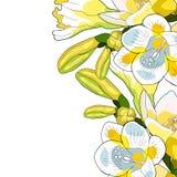 Вид freesia цветка иллюстрации вектора радужки Стоковые Изображения RF