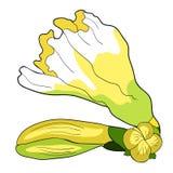 Вид freesia цветка иллюстрации вектора радужки Стоковое Изображение RF